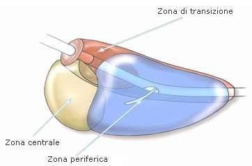 prostata-zone